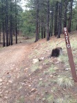 Road 9121G - Technically closed year round (would be open for hunter access)
