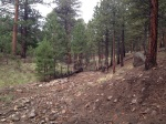 100 yards down FR9121G, canyon, water drainage