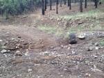 Evidence of road use and ecological damage.