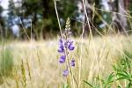 Wildflower in Abineau PWA