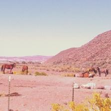 Wild Mustangs at Hidden Valley Regional Park