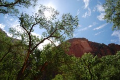 Sunny Day in Zion